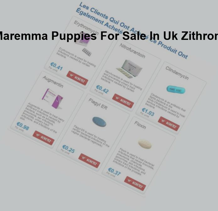 Wolf husky hybrid puppies for sale in uk zithromax